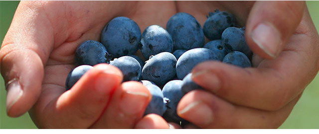 Your bonus offer: Blueberries coupon